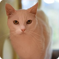 Adopt A Pet :: Spirit - Modesto, CA