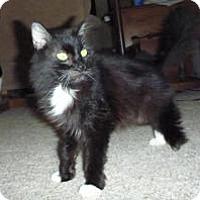 Adopt A Pet :: Amelia - Cincinnati, OH