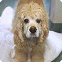 Adopt A Pet :: Cooper S 16-071 - Colorado Springs, CO