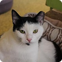 Adopt A Pet :: Norville - Indianapolis, IN