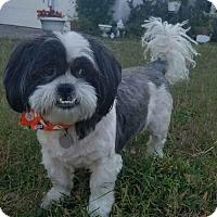 Adopt A Pet :: Oreo - Sarasota, FL