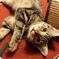 Adopt A Pet :: Charli - Memphis, TN