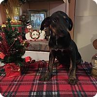Adopt A Pet :: Bindy - Kittery, ME