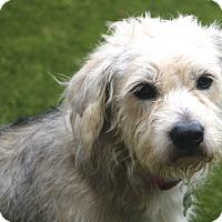 Adopt A Pet :: Grayson - Meet Me! - Woonsocket, RI