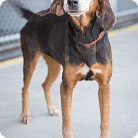 Adopt A Pet :: Clara Belle - Summerville, SC