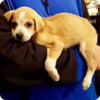 Adopt A Pet :: Oak - Waldorf, MD