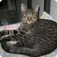 Adopt A Pet :: Skeeter - Powell, OH