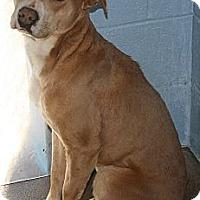Adopt A Pet :: Barney - Bardonia, NY