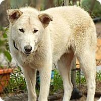 Adopt A Pet :: Skeeter - Orlando, FL