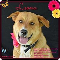 Adopt A Pet :: Leona - Plano, TX