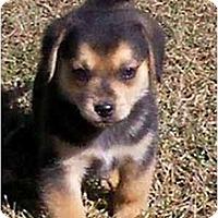 Adopt A Pet :: Google - Portland, OR