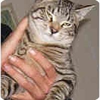 Adopt A Pet :: Braveheart - Dallas, TX