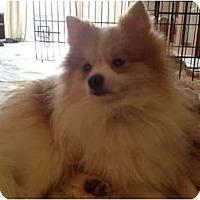 Adopt A Pet :: Pockets - Hilliard, OH