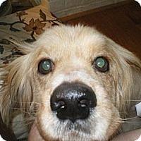 Adopt A Pet :: Duranti - Apex, NC