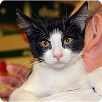 Adopt A Pet :: Susie Q - Monroe, GA