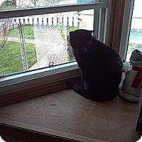 Adopt A Pet :: Cole - Saint Albans, WV