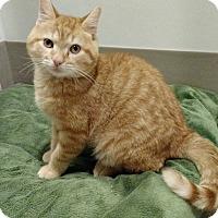 Adopt A Pet :: Keller - Chicago, IL