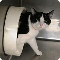 Adopt A Pet :: Ella - Geneseo, IL