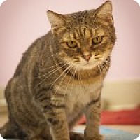 Adopt A Pet :: Leo - Circleville, OH
