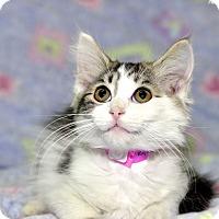 Adopt A Pet :: Brie - Medina, OH