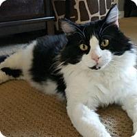 Adopt A Pet :: Sammy - Ventura, CA