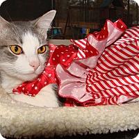 Adopt A Pet :: Harper - Marietta, GA