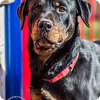 Adopt A Pet :: Pheme - Frederick, PA