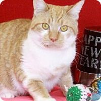 Adopt A Pet :: Henry - South Bend, IN