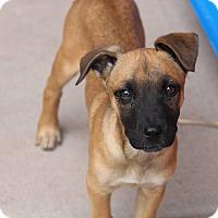 Adopt A Pet :: Funyon - Phoenix, AZ