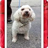 Adopt A Pet :: Adopted!! Daisy Mae - IL - Tulsa, OK