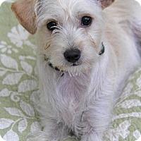 Adopt A Pet :: Cabo - Yuba City, CA