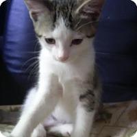 Adopt A Pet :: Rose - Toronto, ON