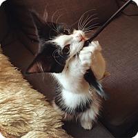 Adopt A Pet :: Matthew - Toronto, ON