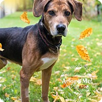Adopt A Pet :: Huck - Toronto, ON