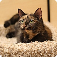 Adopt A Pet :: Mabel - Richmond, VA