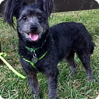 Adopt A Pet :: Truman - Davie, FL