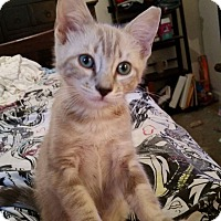 Adopt A Pet :: Esme - Ocala, FL