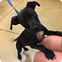 Adopt A Pet :: Jack - Royal Palm Beach, FL
