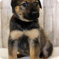 Adopt A Pet :: Cary - Waldorf, MD