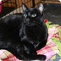 Adopt A Pet :: Mocha - Rochester, MN