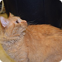 Adopt A Pet :: Petry - Pottsville, PA