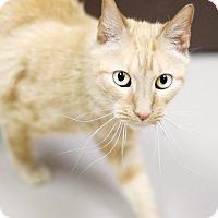 Adopt A Pet :: Jeremy - Appleton, WI