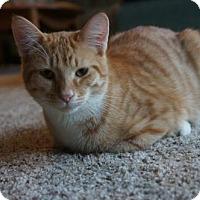 Adopt A Pet :: X Litter Spike - Adopted 02.19.17 - Williamston, MI