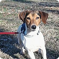 Adopt A Pet :: Dixie - Hollis, ME