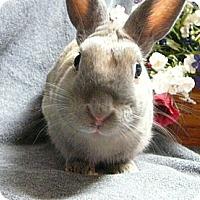 Adopt A Pet :: Mario - Newport, DE
