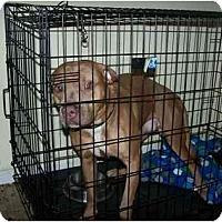 Adopt A Pet :: Reece - Little River, SC