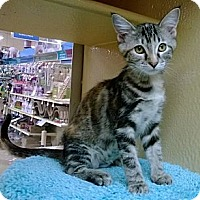Adopt A Pet :: Nutmeg - The Colony, TX