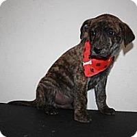 Adopt A Pet :: Mutt - Stilwell, OK