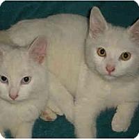 Adopt A Pet :: Amy & Tarun - Davis, CA