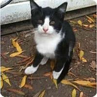 Adopt A Pet :: Bennett - Davis, CA